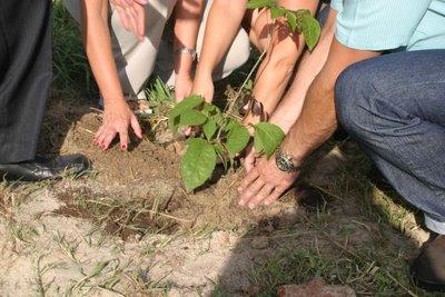 Maricá lança programa de reflorestamento no aniversário da cidade. (Foto: Reprodução | Internet)