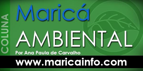 Maricá Ambiental - Clique e curta a página do MaricáInfo.com no Facebook.