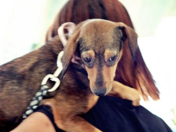 Maricá terá dia dedicado aos animais. (Foto: João Henrique | Maricá Info)