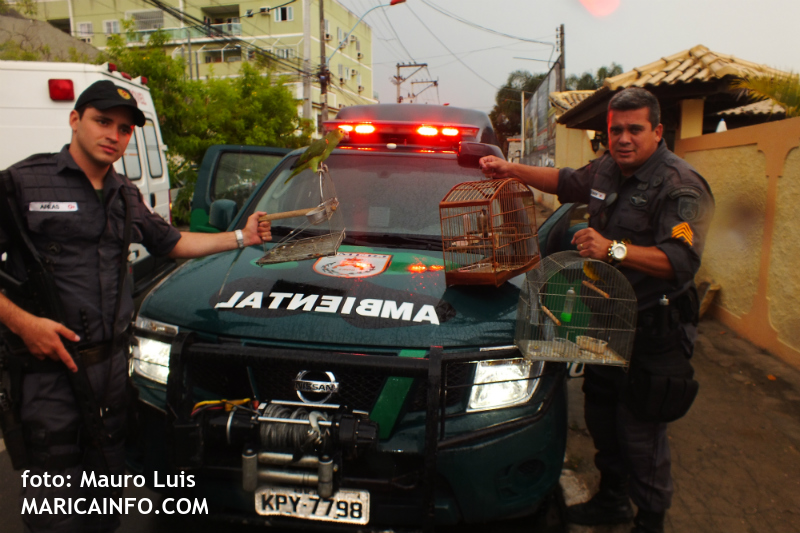 Maricá: Polícia Ambiental apreende pássaros silvestres