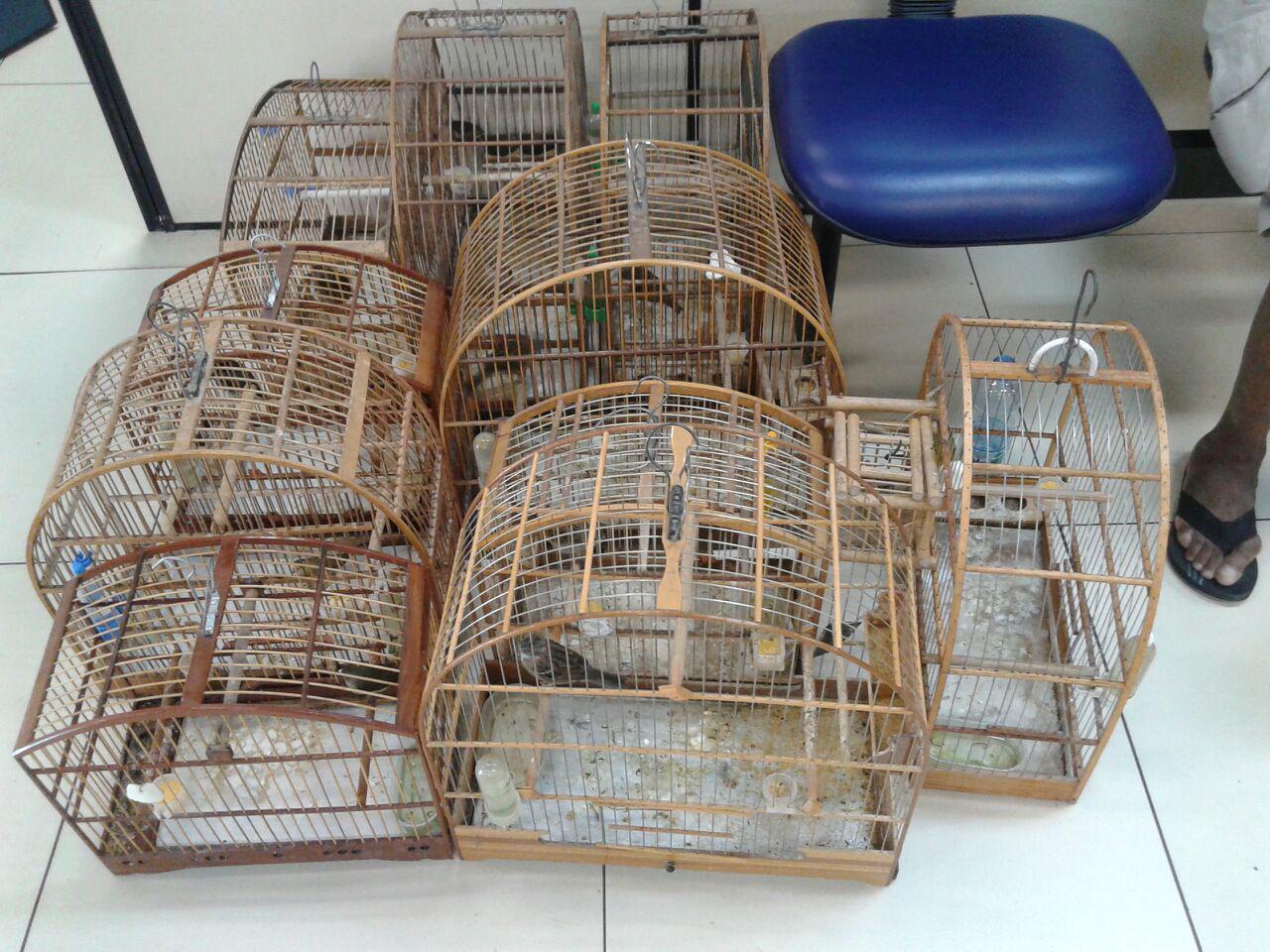 Polícia Ambiental apreende pássaros mantidos em cativeiro em ... - Maricá Info (Blogue)