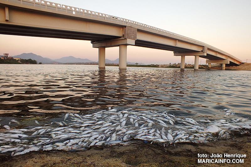 Prefeitura recolhe peixes mortos na Barra de Maricá
