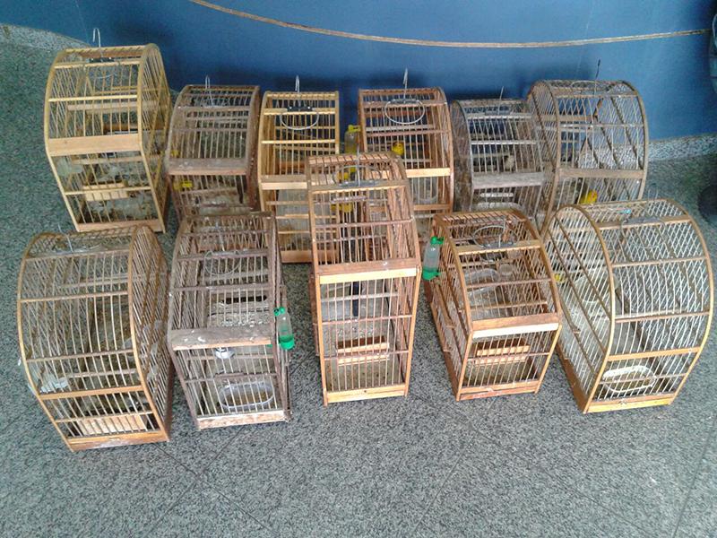 Quatorze pássaros foram apreendidos por PMs da UPAm MF. (fotos: Mauro Luis / Maricá Info)