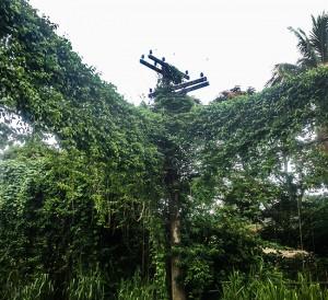 Vegetação encobre fiações em postes no bairro São José do Imbassaí, em Maricá.