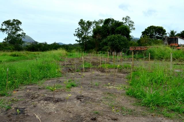 'Maricá + Verde' realiza plantio de 2.232 mudas no bairro Manu Manuela, em Maricá
