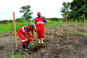 O reflorestamento das matas ciliares é realizado por uma equipe de oito funcionários da Prefeitura com o apoio da população. (fotos: Fernando Silva)