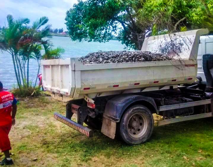 Maricá registra toneladas de peixes mortos em lagoa