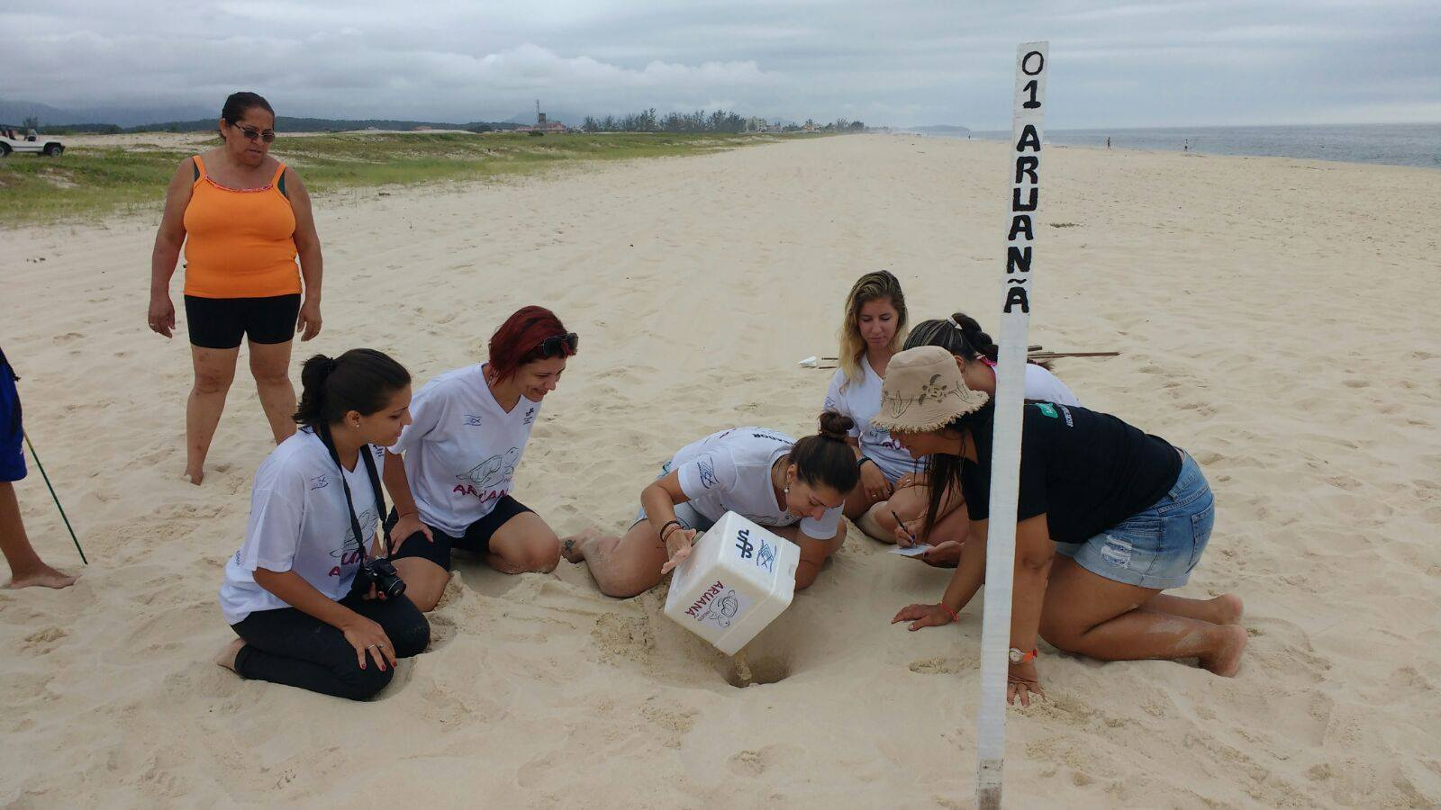 Maricá: Pesquisadores trocam local de ninho de tartaruga marinha para proteger os ovos