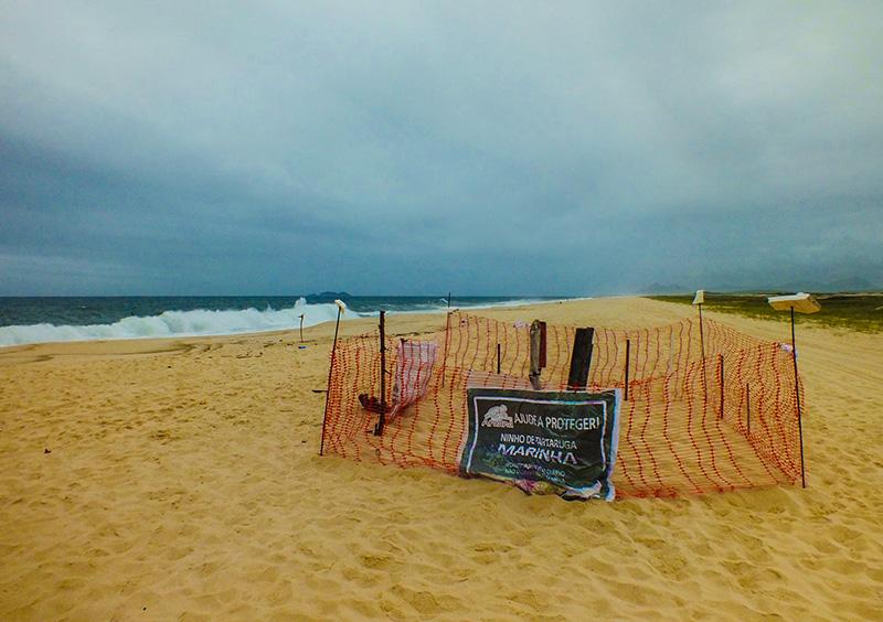 Maricá: Ninho de Tartaruga é monitorado diariamente