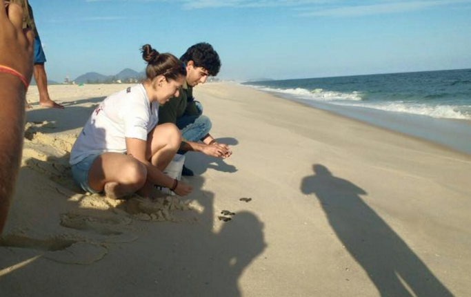 Maricá: Tartarugas marinhas saem do ninho e ganham o mar