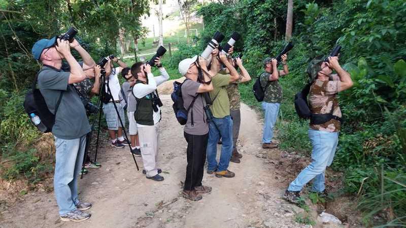 Em Maricá, observadores registram as espécies de aves