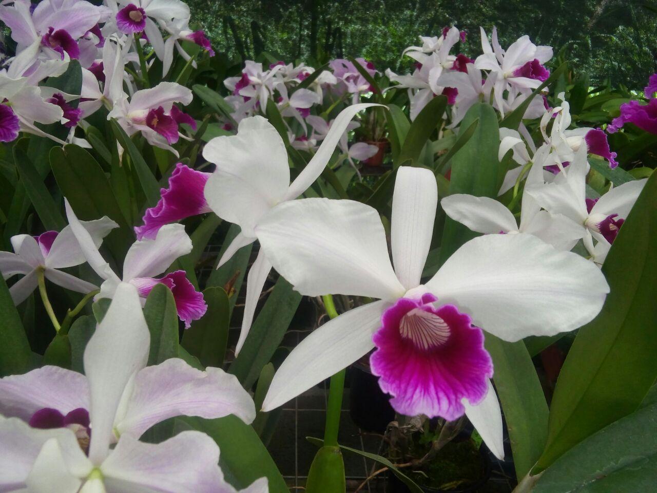 Maricá receberá exposição de orquídeas neste fim de semana
