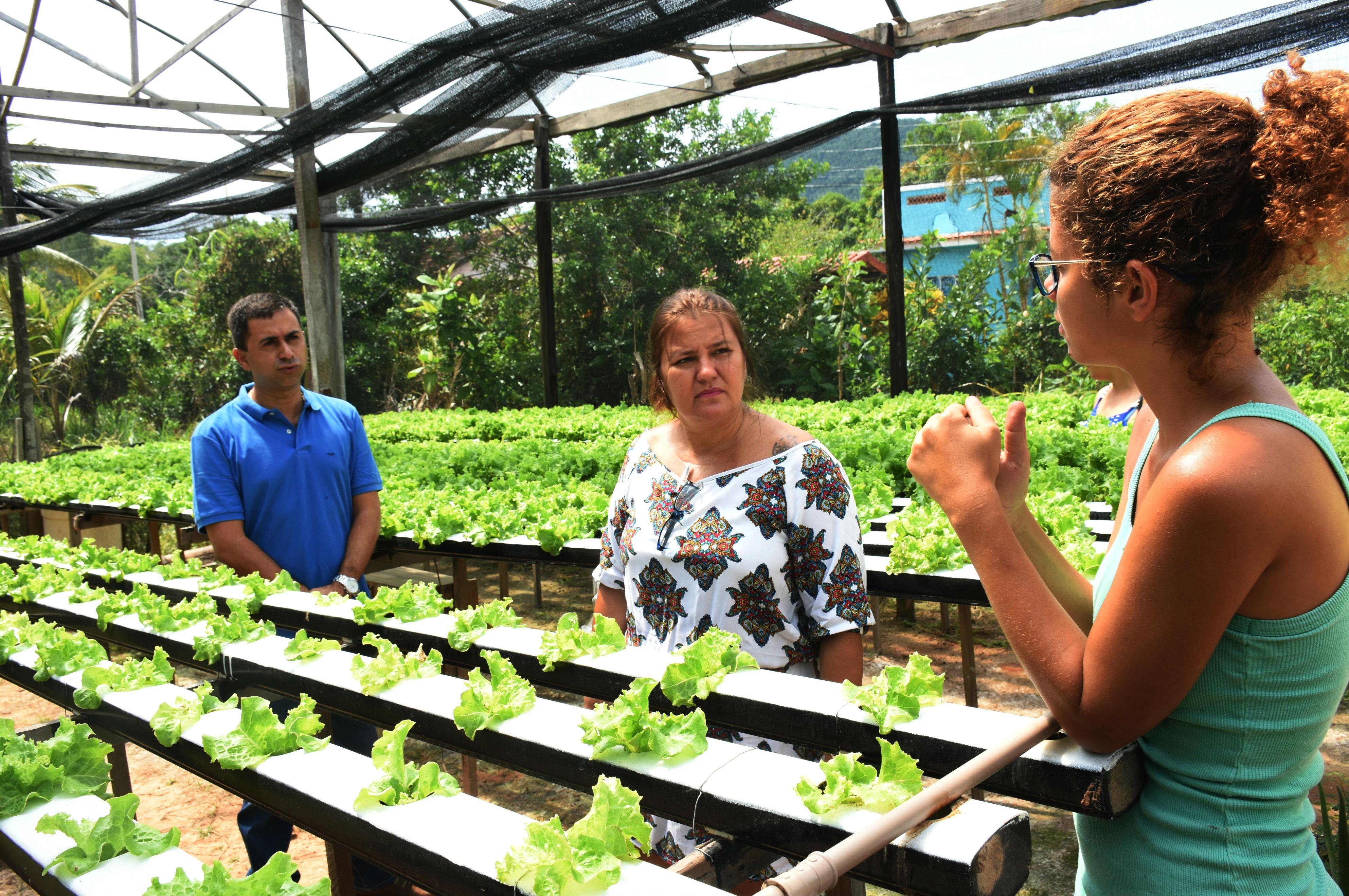 Secretário de Agricultura visita produção com sistema hidropônico em Maricá