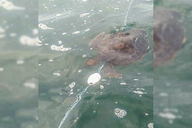 Denúncia: Pescadores cometem crime ambiental em Ponta Negra, Maricá