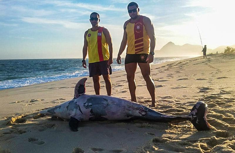 Golfinho é encontrado morto no litoral de Maricá